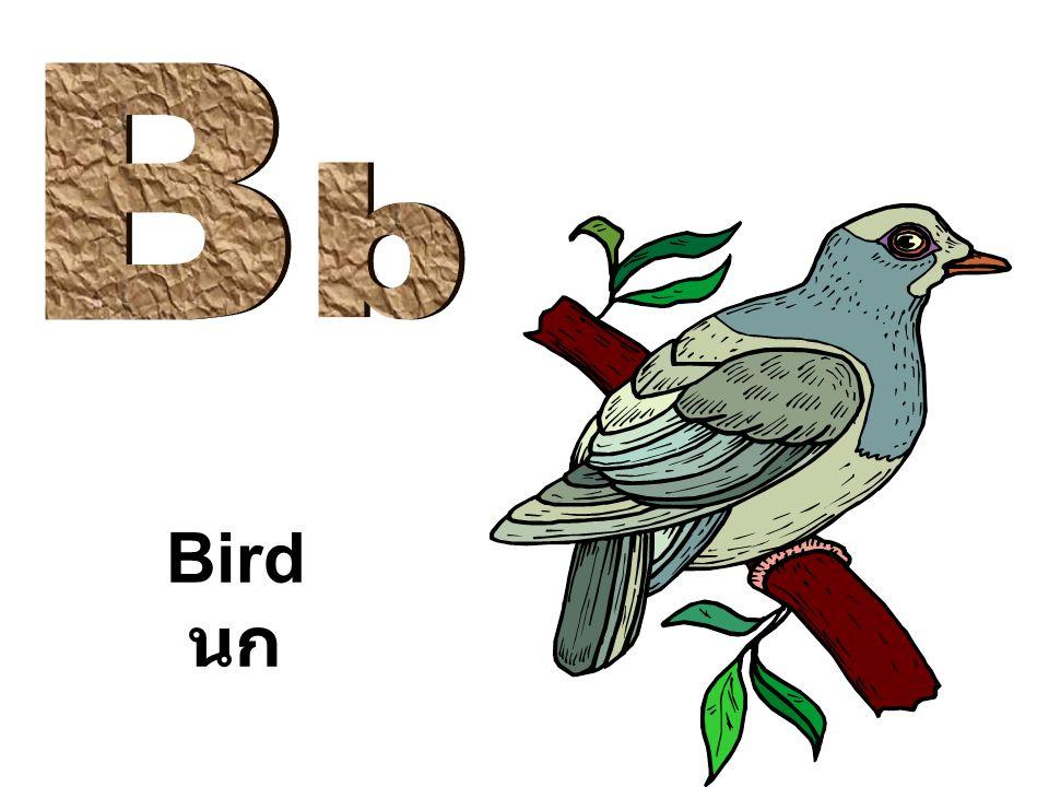 Bird นก