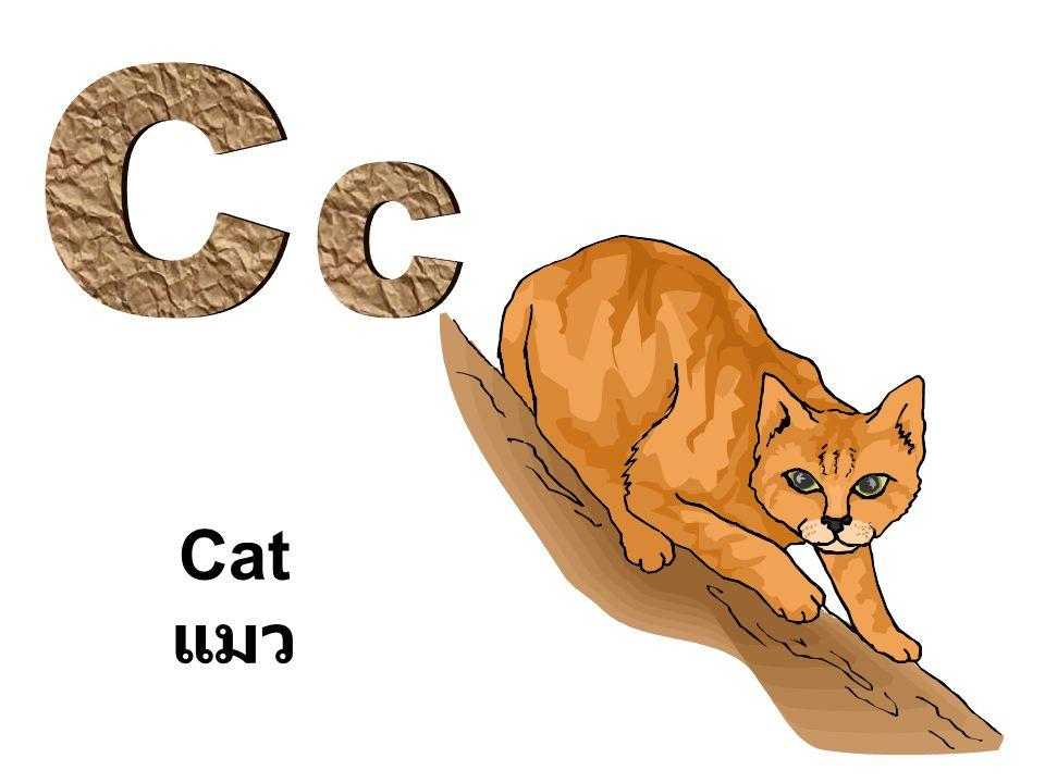 Cat แมว