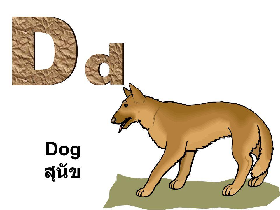 Dog สุนัข