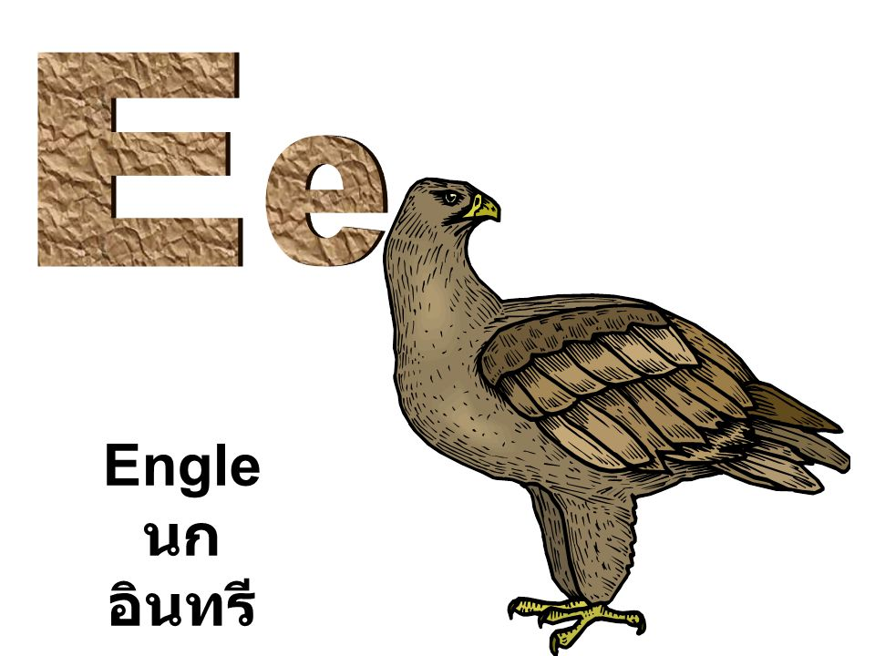 Engle นก อินทรี