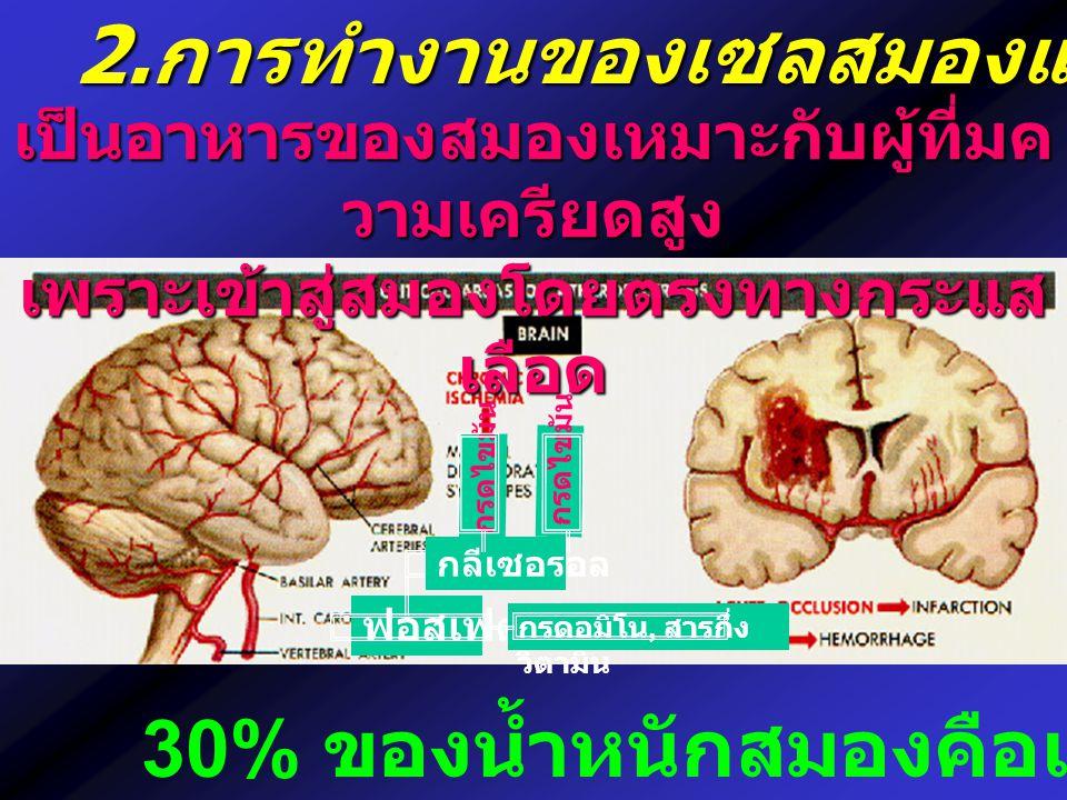 2. การทำงานของเซลสมองและประสาท เป็นอาหารของสมองเหมาะกับผู้ที่มค วามเครียดสูง เพราะเข้าสู่สมองโดยตรงทางกระแส เลือด ฟอสเฟต กรดอมิโน, สารกึ่ง วิตามิน กลี