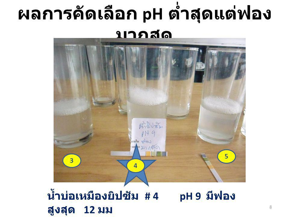ผลการคัดเลือก pH ต่ำสุดแต่ฟอง มากสุด น้ำบ่อเหมืองยิปซัม # 4 pH 9 มีฟอง สูงสุด 12 มม 3 5 4 8