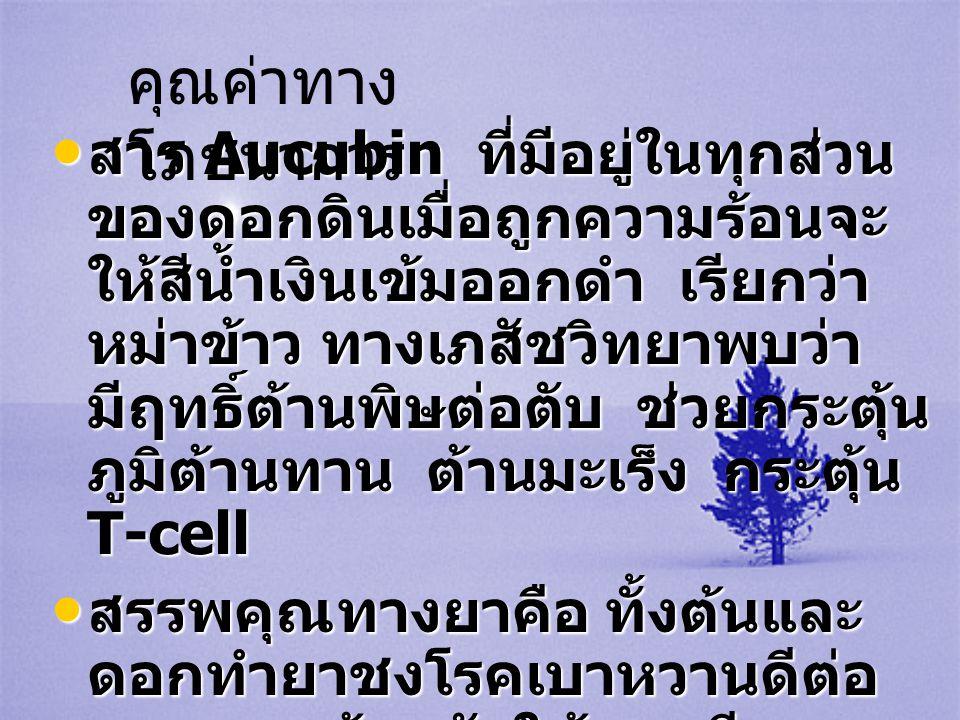 • สาร Aucubin ที่มีอยู่ในทุกส่วน ของดอกดินเมื่อถูกความร้อนจะ ให้สีน้ำเงินเข้มออกดำ เรียกว่า หม่าข้าว ทางเภสัชวิทยาพบว่า มีฤทธิ์ต้านพิษต่อตับ ช่วยกระตุ