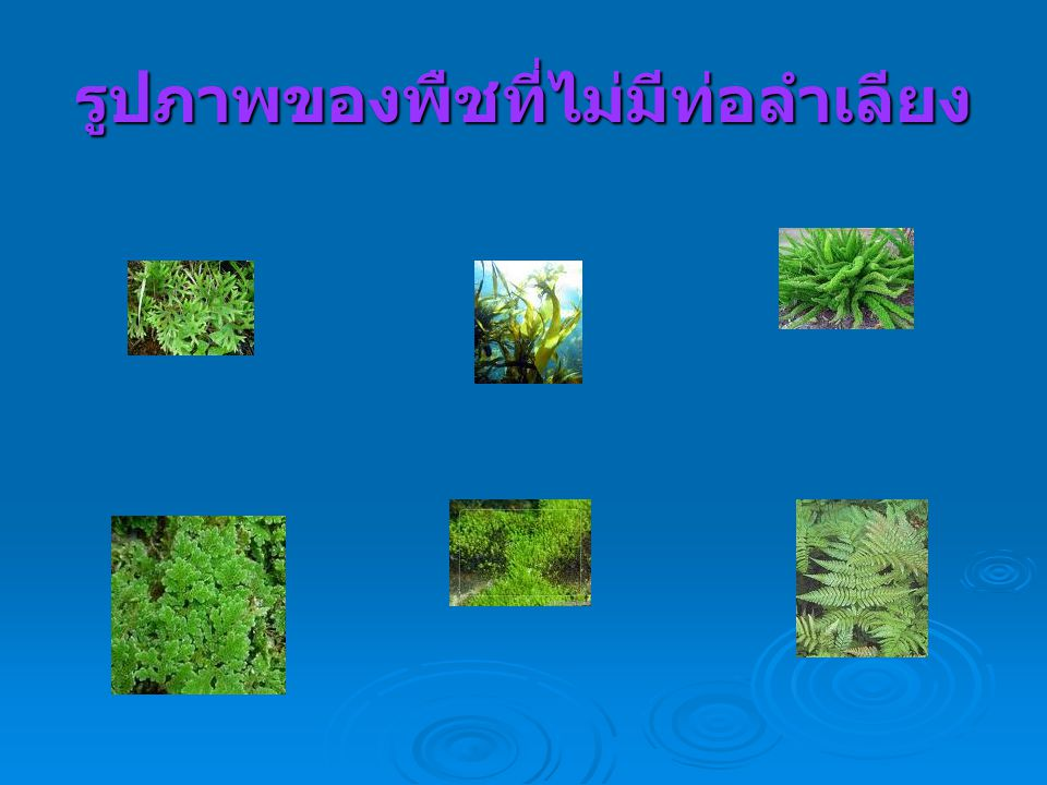รูปภาพของพืชที่ไม่มีท่อลำเลียง