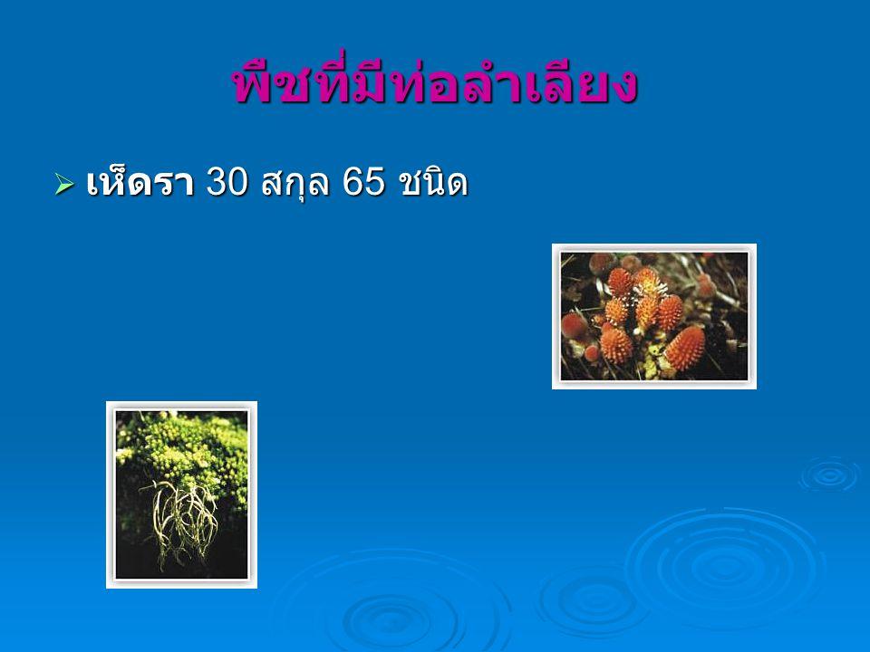 พืชที่มีท่อลำเลียง  เห็ดรา 30 สกุล 65 ชนิด