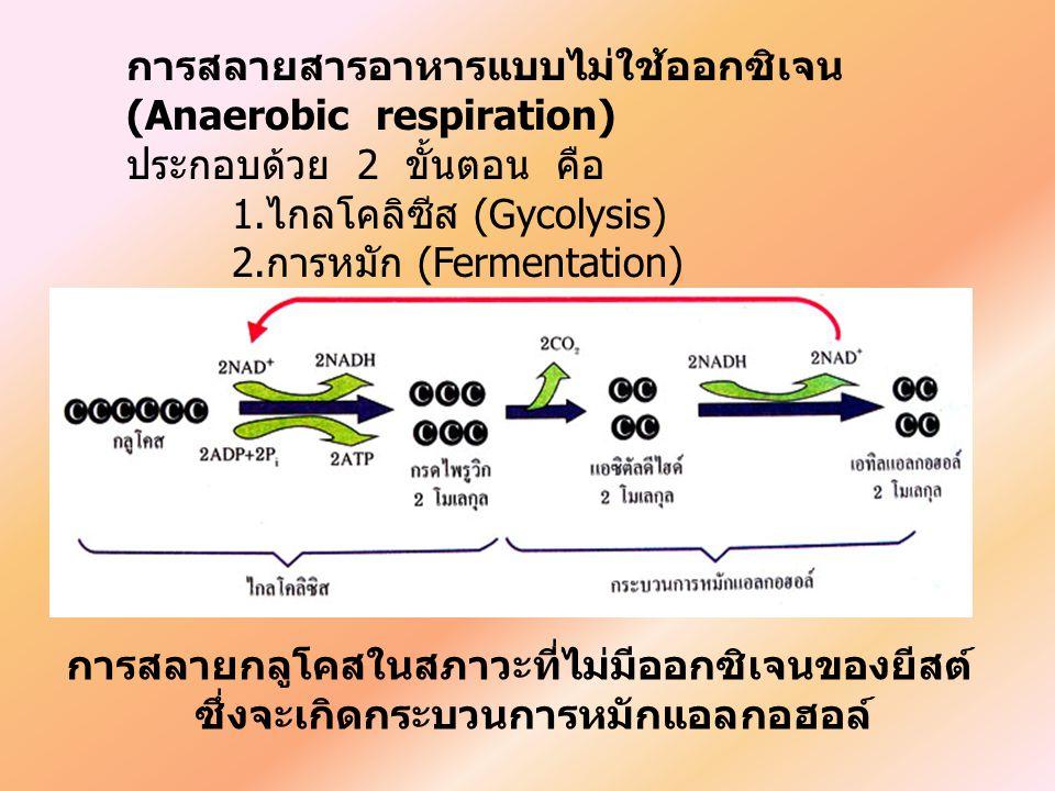 การสลายสารอาหารแบบไม่ใช้ออกซิเจน (Anaerobic respiration) ประกอบด้วย 2 ขั้นตอน คือ 1. ไกลโคลิซีส (Gycolysis) 2. การหมัก (Fermentation) การสลายกลูโคสในส