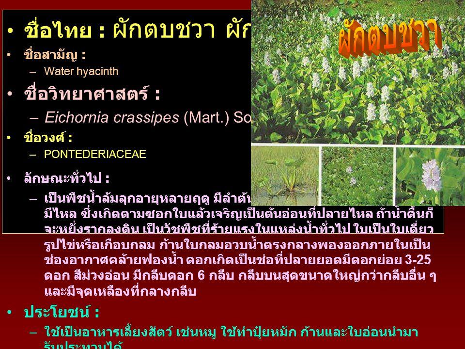 • ชื่อไทย : ผักตบชวา ผักป่อง สวะ • ชื่อสามัญ : –Water hyacinth • ชื่อวิทยาศาสตร์ : –Eichornia crassipes (Mart.) Solms • ชื่อวงศ์ : –PONTEDERIACEAE • ล