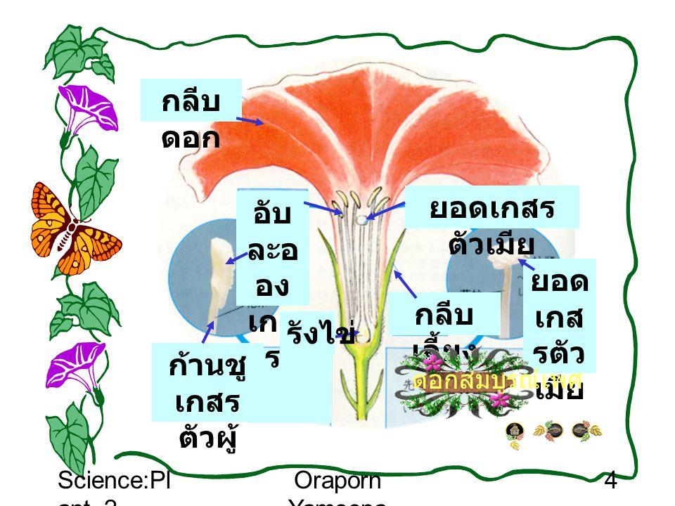 Science:Pl ant_2 Oraporn Yamsopa 4 กลีบ เลี้ยง อับ ละอ อง เกส ร ยอด เกส รตัว เมีย ก้านชู เกสร ตัวผู้ กลีบ ดอก รังไข่ ดอกสมบูรณ์เพศ