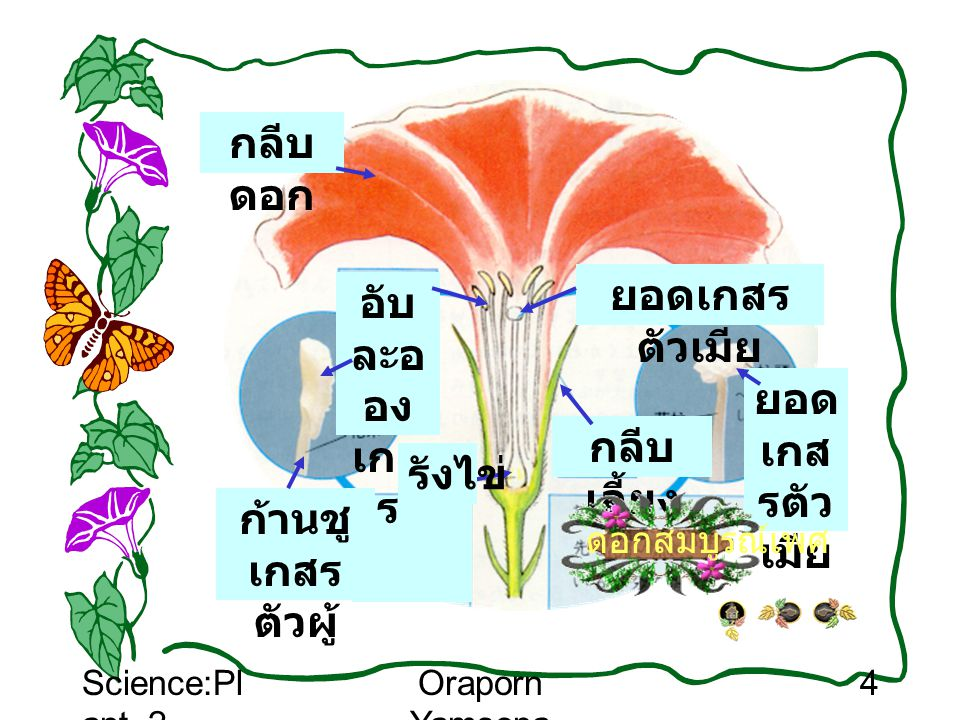 Science:Pl ant_2 Oraporn Yamsopa 5 ลองบอกส่วนประกอบ ของดอกไม้ 1 2 3 5 6 7 8 9 10 4