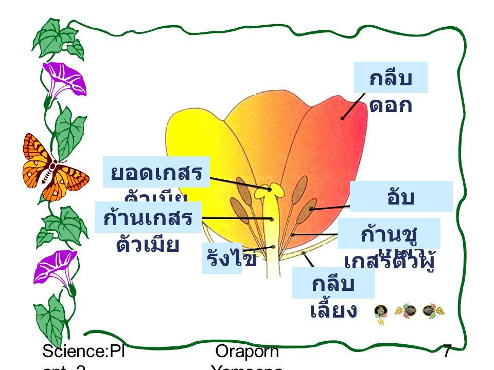 Science:Pl ant_2 Oraporn Yamsopa 7 กลีบ เลี้ยง อับ ละออง เกสร ก้านชู เกสรตัวผู้ ยอดเกสร ตัวเมีย ก้านเกสร ตัวเมีย กลีบ ดอก รังไข่