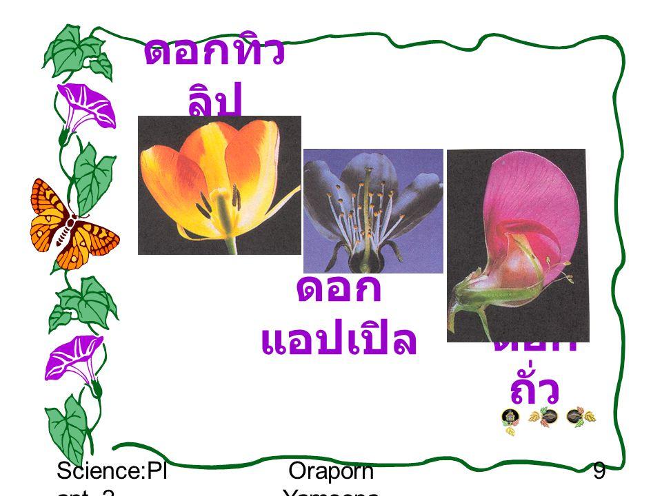 Science:Pl ant_2 Oraporn Yamsopa 10 ดอกไม่ สมบูรณ์เพศ ดอกไม้บางชนิด อาจเป็นดอกตัวผู้ หรือ ดอกตัวเมีย เช่น ดอกฟักทอง ดอก มะละกอ ดอกข้าวโพด