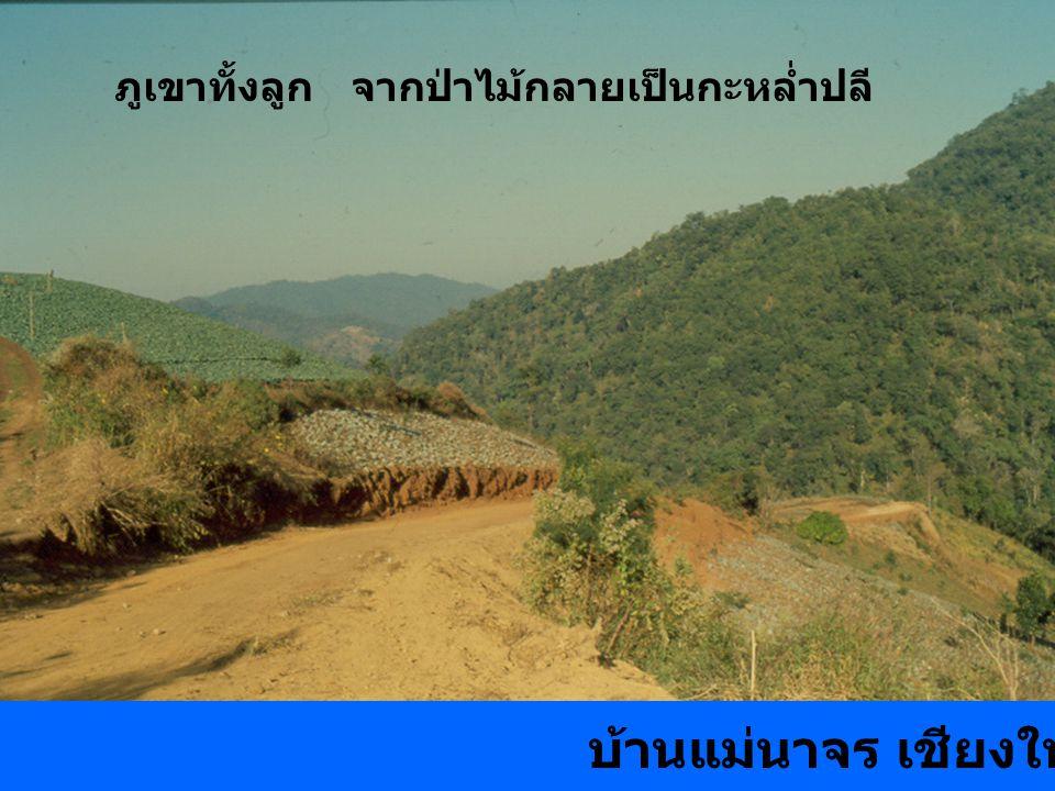 ภูเขาทั้งลูก จากป่าไม้กลายเป็นกะหล่ำปลี บ้านแม่นาจร เชียงใหม่ 2532