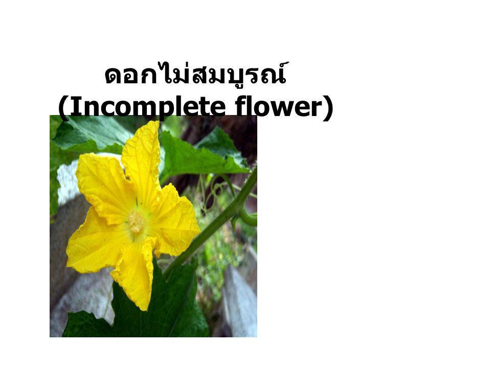 ดอกสมบูรณ์เพศ (Perfect flower)