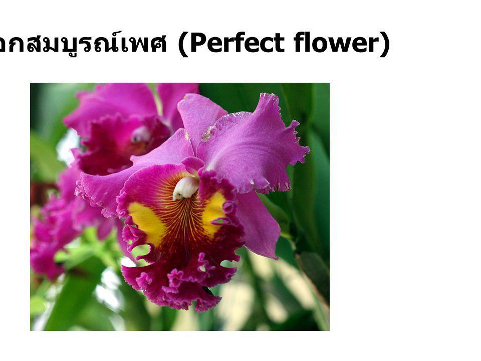 ดอกไม่สมบูรณ์เพศ (Imperfect flower)