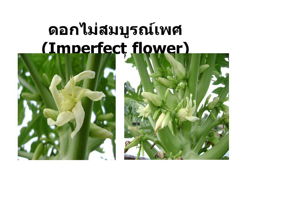 ดอกเดี่ยว ( Solitary flower ) เป็นดอกที่เกิดขึ้นบนก้านดอก เช่น ชบา การะเวก บัว