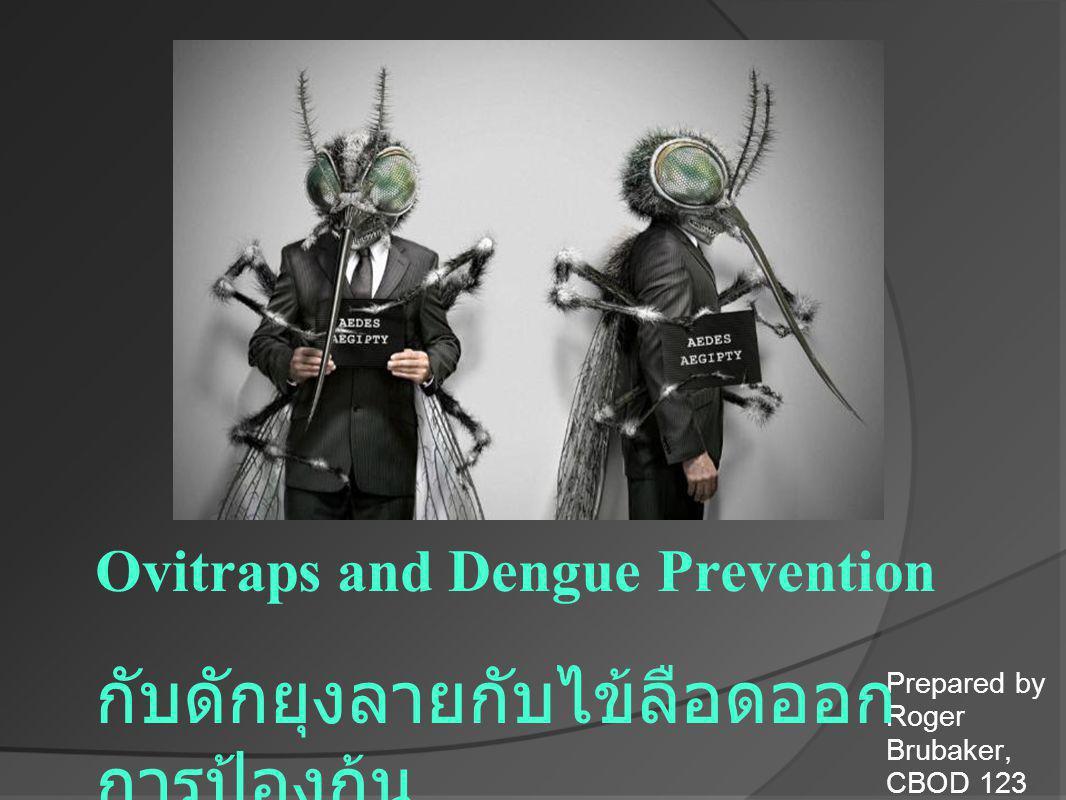 Prepared by Roger Brubaker, CBOD 123 Ovitraps and Dengue Prevention กับดักยุงลายกับไข้ลือดออก การป้องก้น