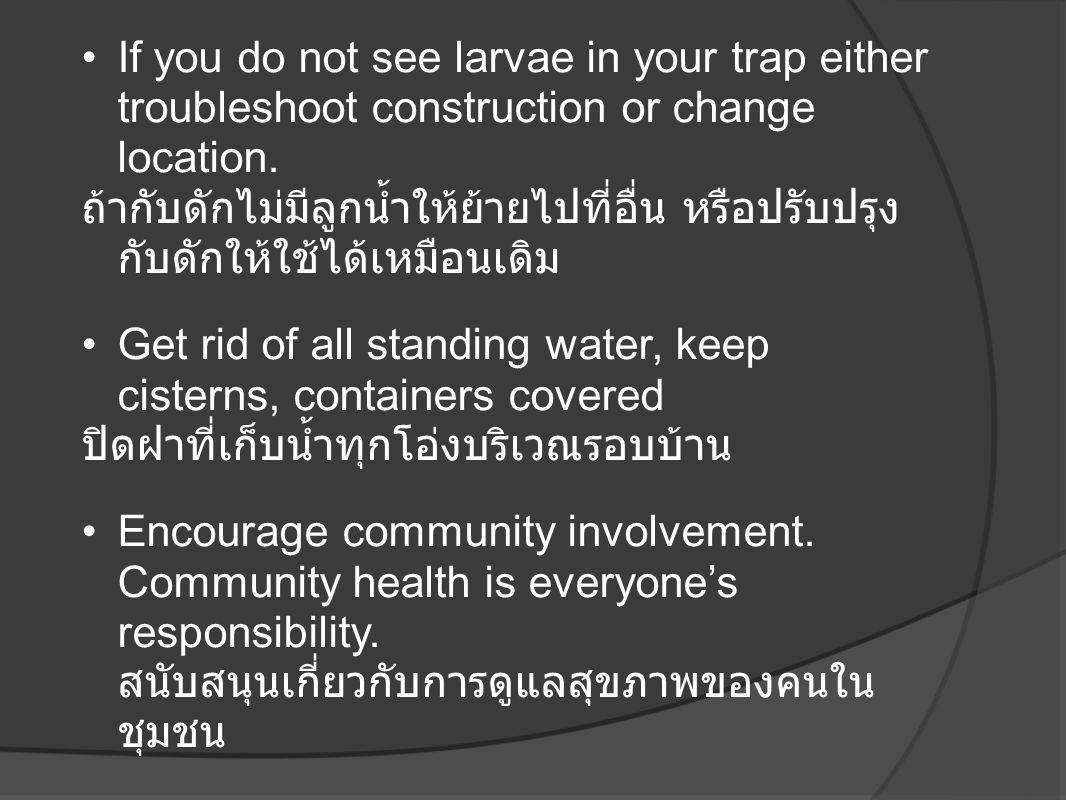 •If you do not see larvae in your trap either troubleshoot construction or change location. ถ้ากับดักไม่มีลูกน้ำให้ย้ายไปที่อื่น หรือปรับปรุง กับดักให