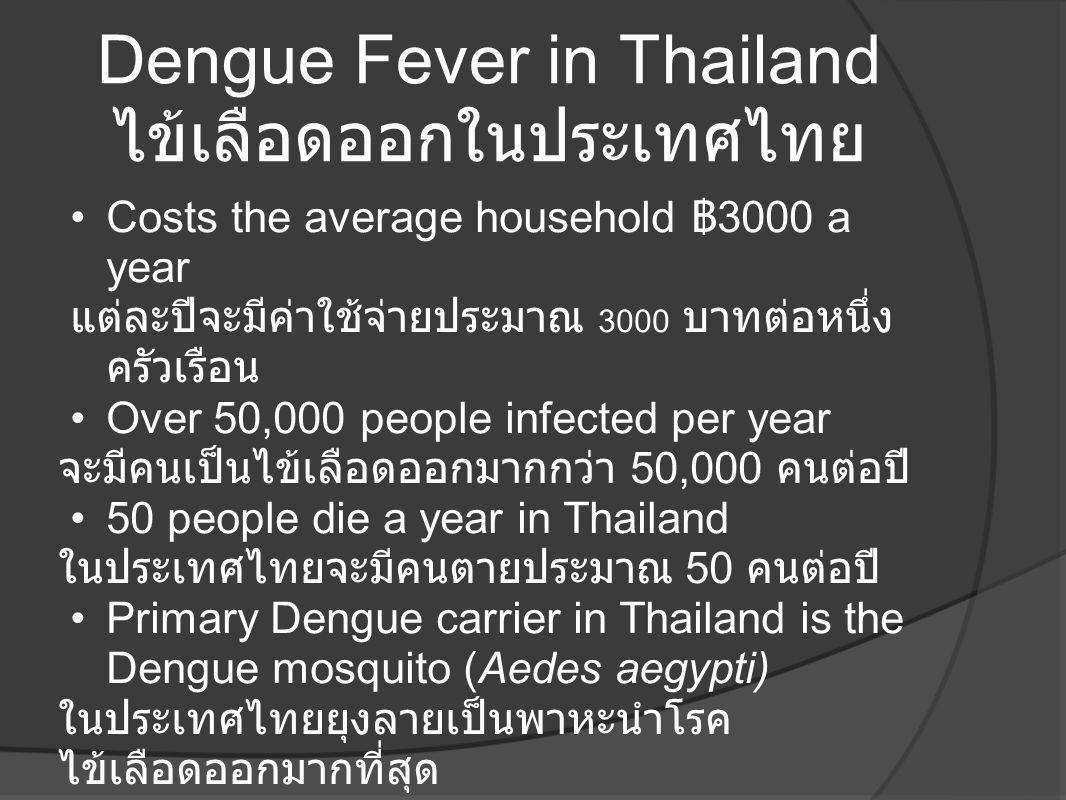 Dengue Fever in Thailand ไข้เลือดออกในประเทศไทย •Costs the average household ฿ 3000 a year แต่ละปีจะมีค่าใช้จ่ายประมาณ 3000 บาทต่อหนึ่ง ครัวเรือน •Ove