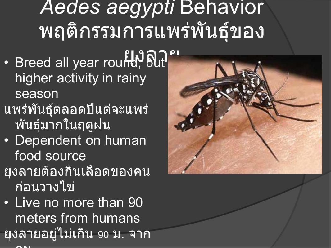 Aedes aegypti Behavior พฤติกรรมการแพร่พันธุ์ของ ยุงลาย •Breed all year round, but higher activity in rainy season แพร่พันธุ์ตลอดปีแต่จะแพร่ พันธุ์มากใ