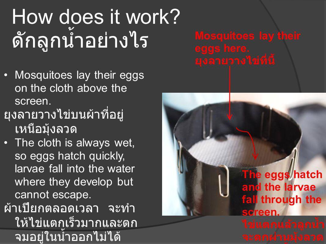 How does it work? ดักลูกน้ำอย่างไร •Mosquitoes lay their eggs on the cloth above the screen. ยุงลายวางไข่บนผ้าที่อยู่ เหนือมุ้งลวด •The cloth is alway
