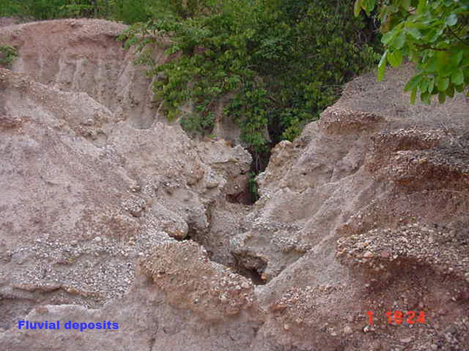 17 Weathered Limestone Weathered limestone