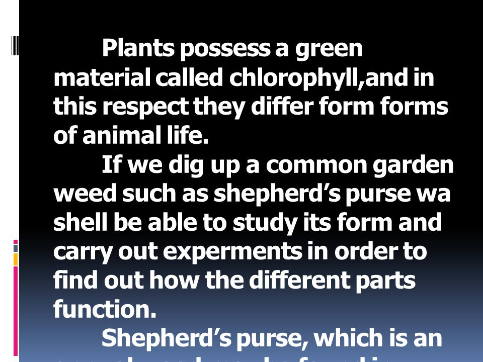 Plants possess a green material called chlorophyll,and in this respect they differ form forms of animal life. If we dig up a common garden weed such a