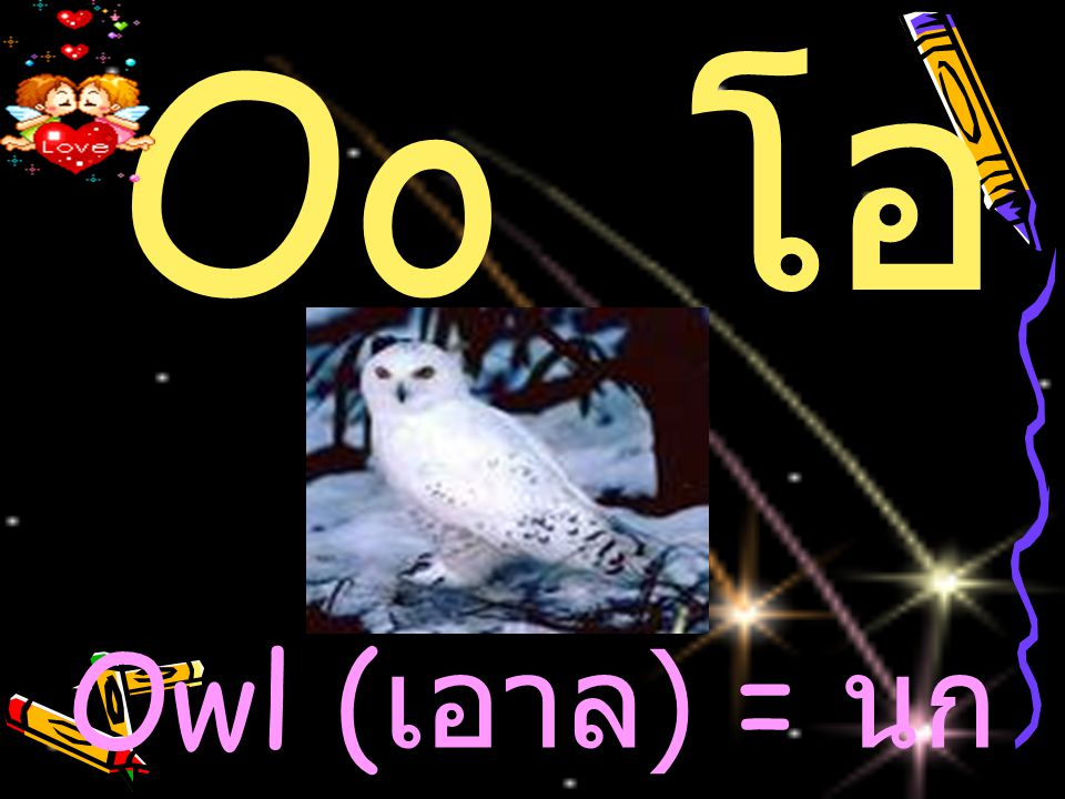 Oo โ อ Owl ( เอาล ) = น ก เค้าแมว