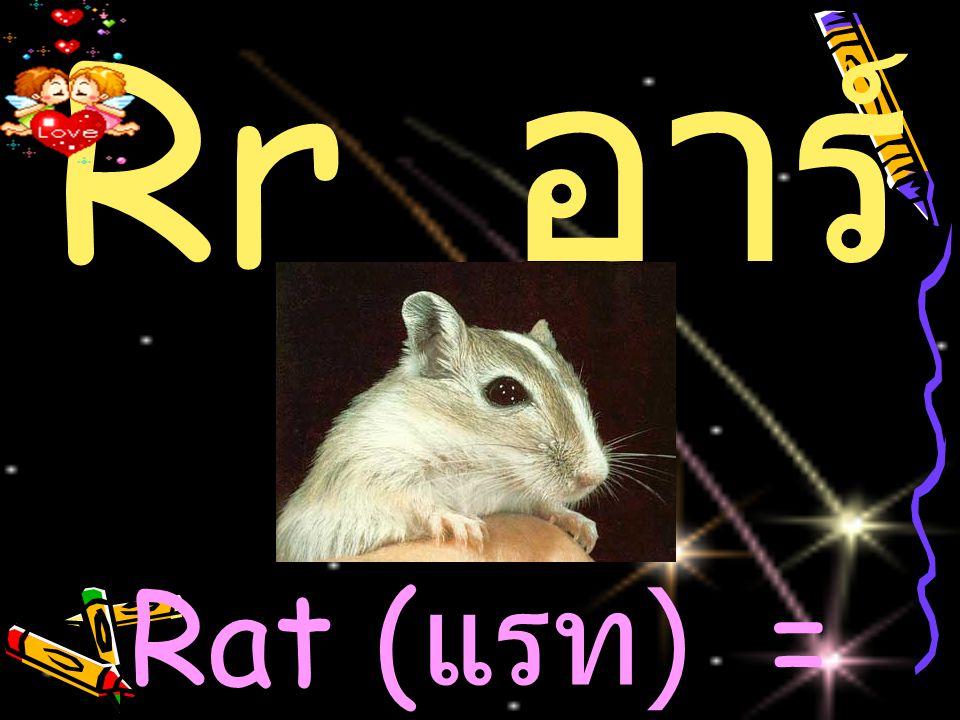 Rr อ าร์ Rat ( แรท ) = หนู
