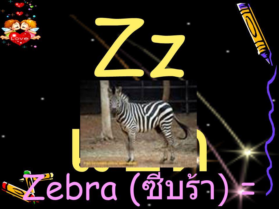 Zz แซด Zebra ( ซีบร้า ) = ม้าลาย