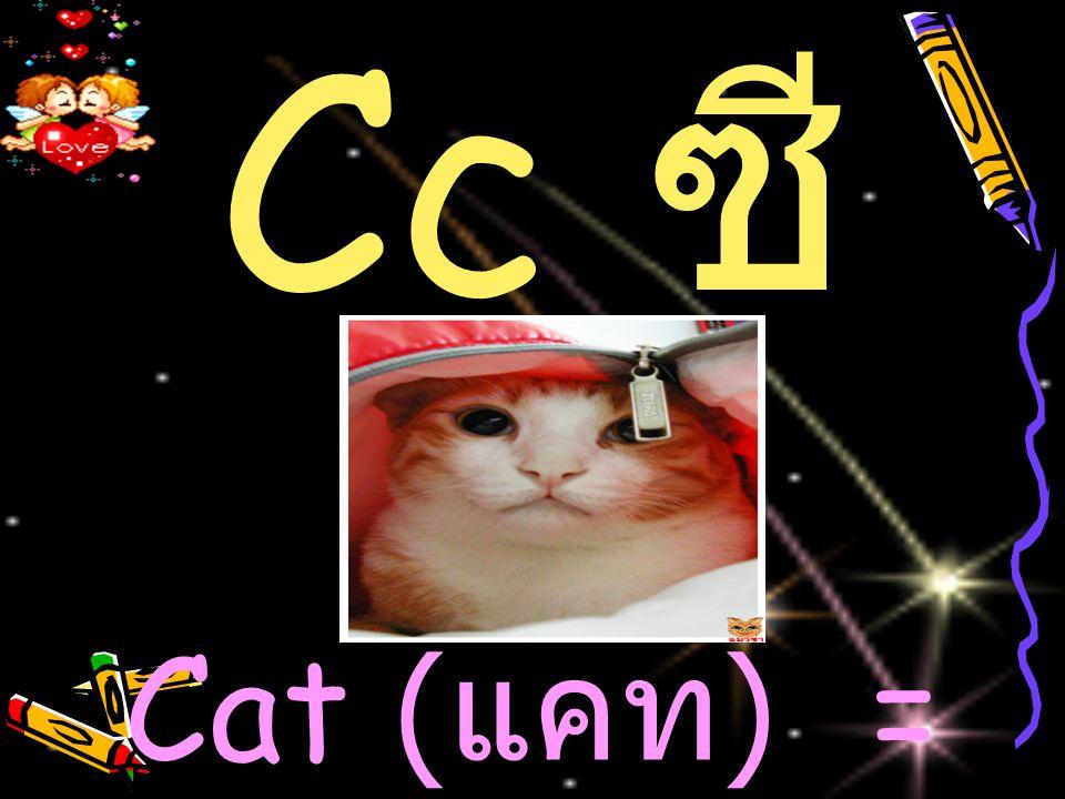 Cc ซี Cat ( แคท )= แมว