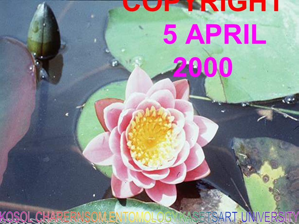 COPYRIGHT 5 APRIL 2000
