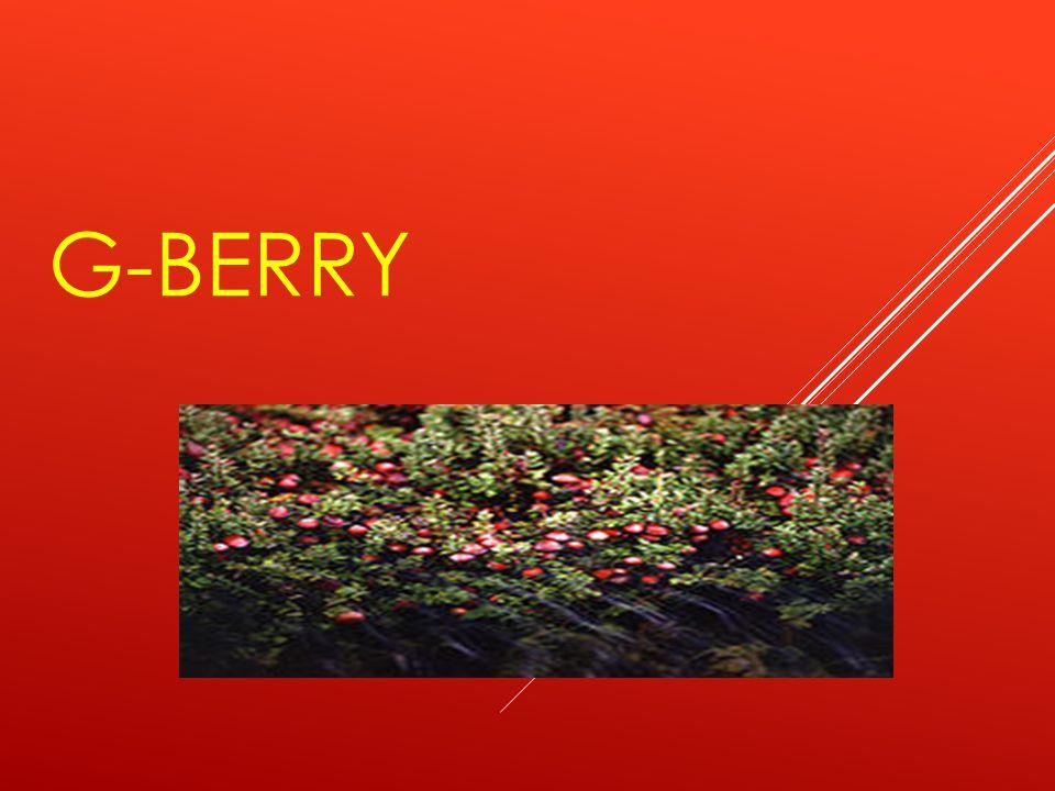 G-BERRY  มีสารโปรแอนโธไซยานิดีน (Proanthocyanidine)  ซึ่งเป็น สารต้านอนุมูลอิสระสี กลุ่มสีม่วง  ที่ดีกับ สุขภาพเส้นเลือด อีกด้วย  เพื่อเสริมสร้างภ