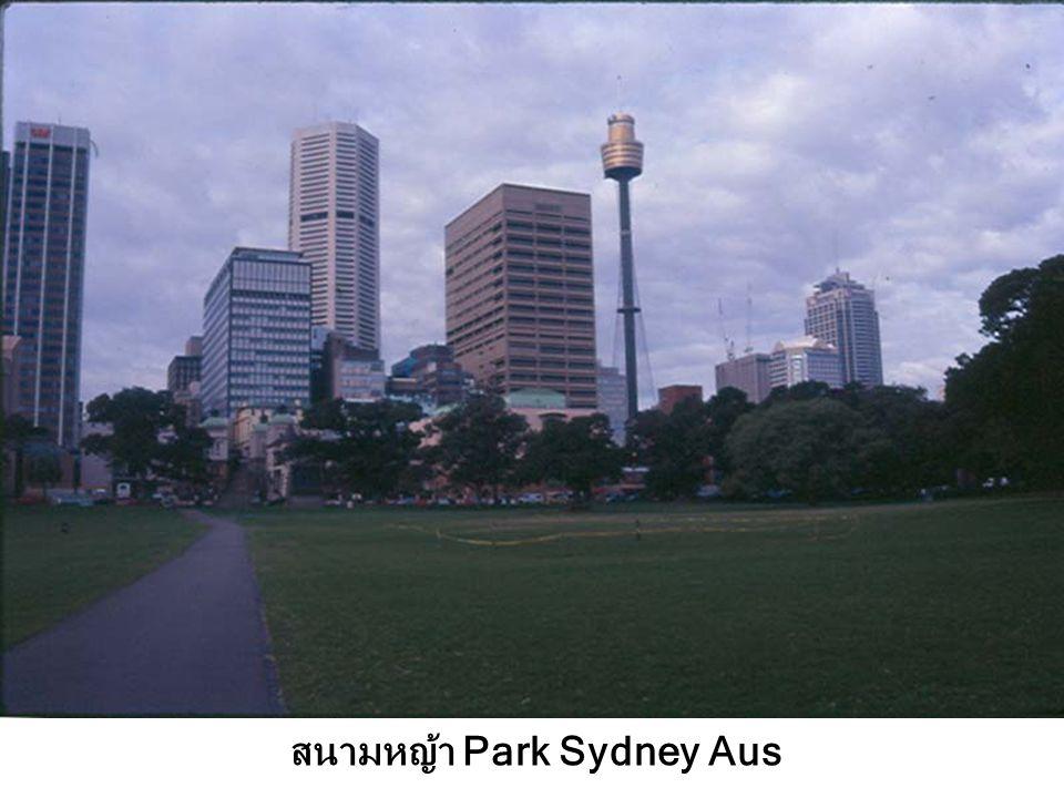 สนามหญ้า Park Sydney Aus
