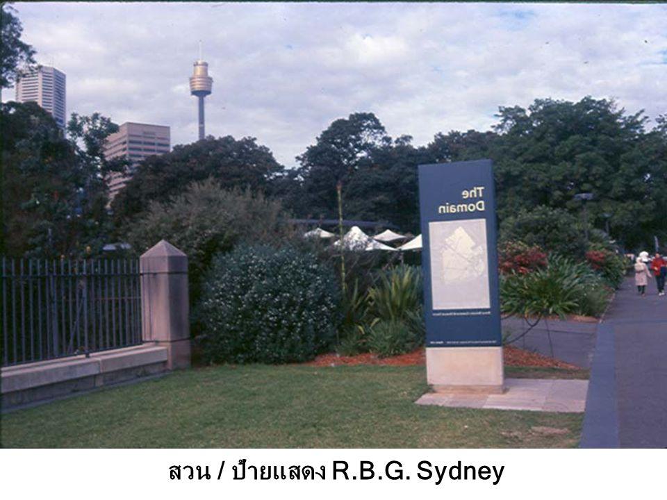 สวน / ป้ายแสดง R.B.G. Sydney