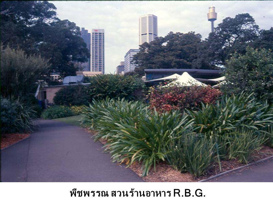 พืชพรรณ สวนร้านอาหาร R.B.G.