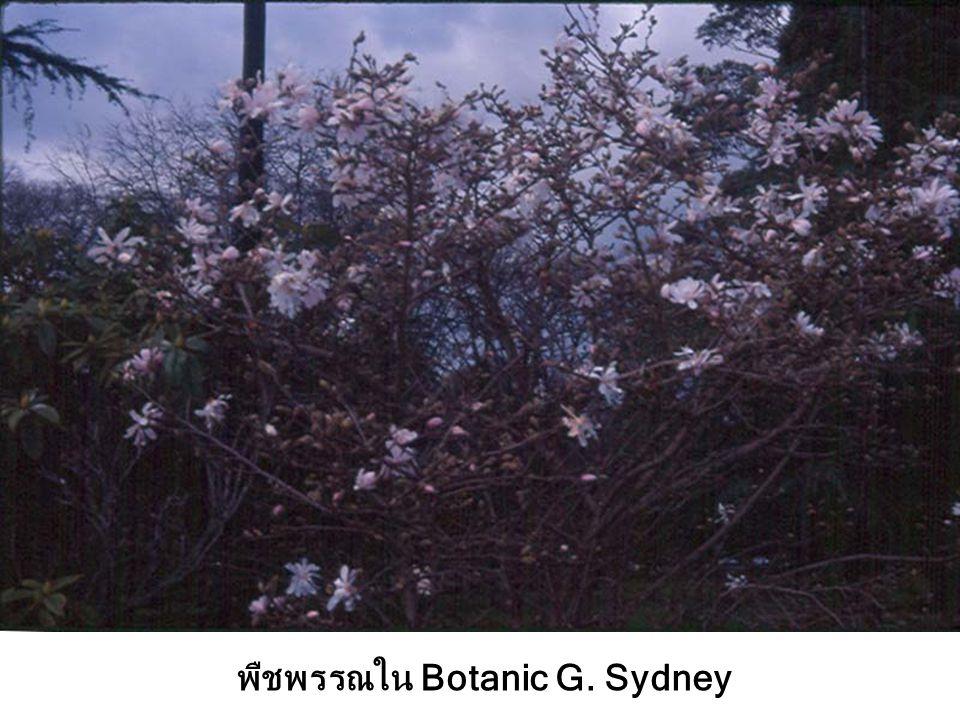 พืชพรรณใน Botanic G. Sydney