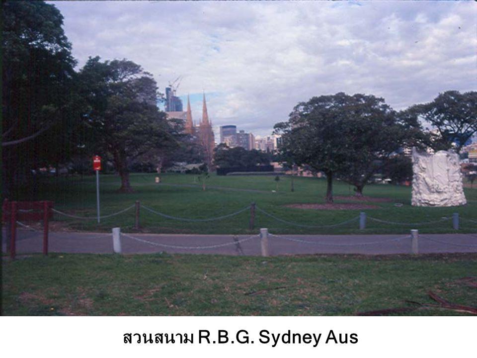 Park Fig Tree Sydney Aus
