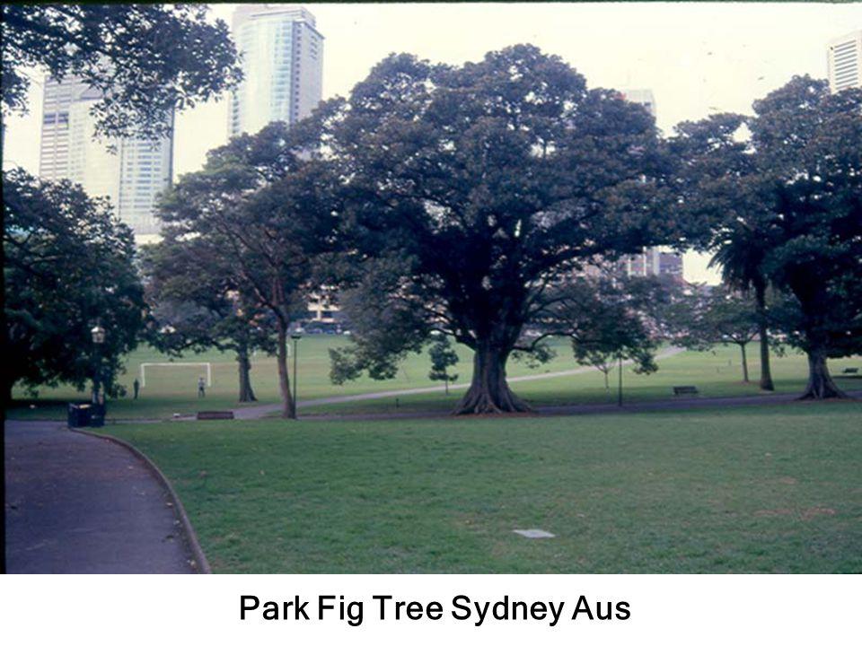 ลาน Park เห็น OH Sydney Aus