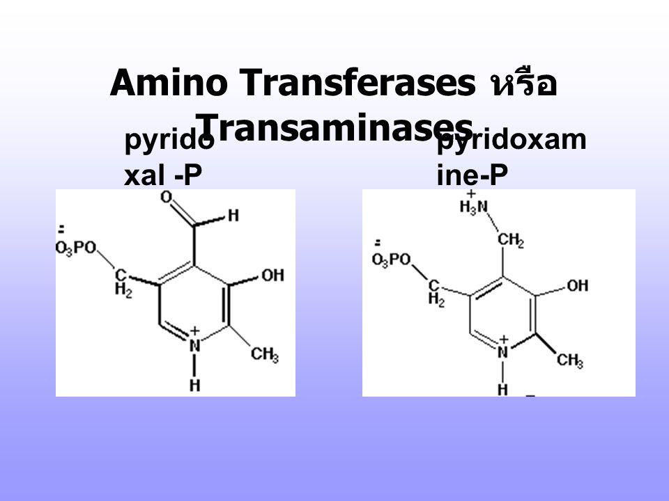 Amino Transferases หรือ Transaminases to  -ketoglutarate ---- -->Glu Glutamate Aminotransferase Liver, heart disease Aspartate Aminotransferase (AST)