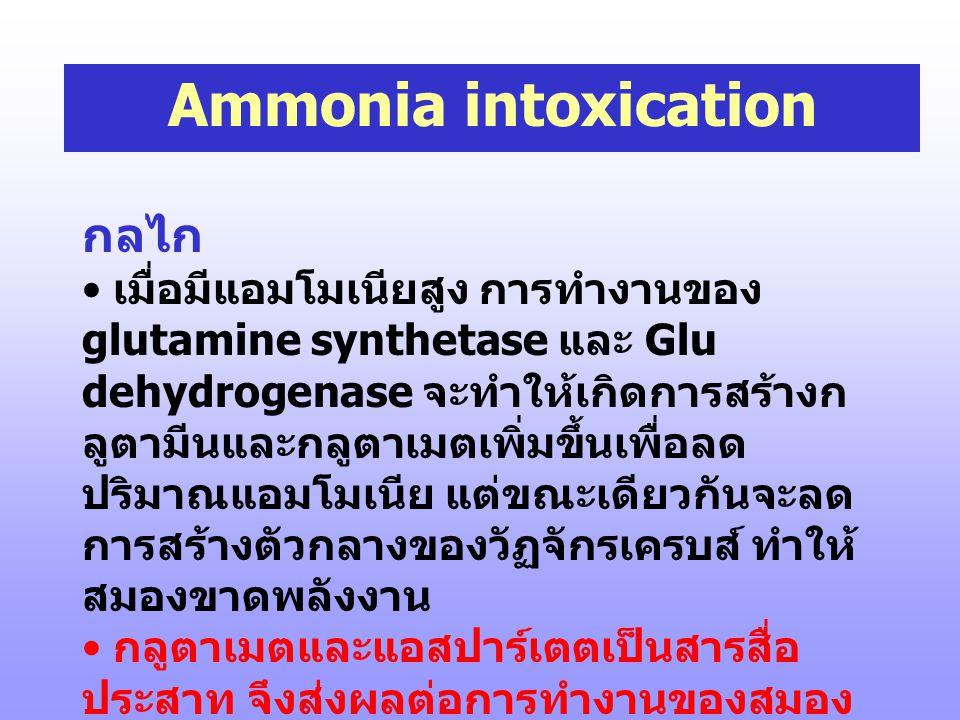 Ammonia intoxication อาการ • ซึม (lethargy) สั่น (tremors) พูดรัว ตาพร่า อาเจียนเมื่อรับประทานอาหาร โปรตีน โคม่า และอาจถึงแก่ความตาย • มักพบในผู้ป่วย