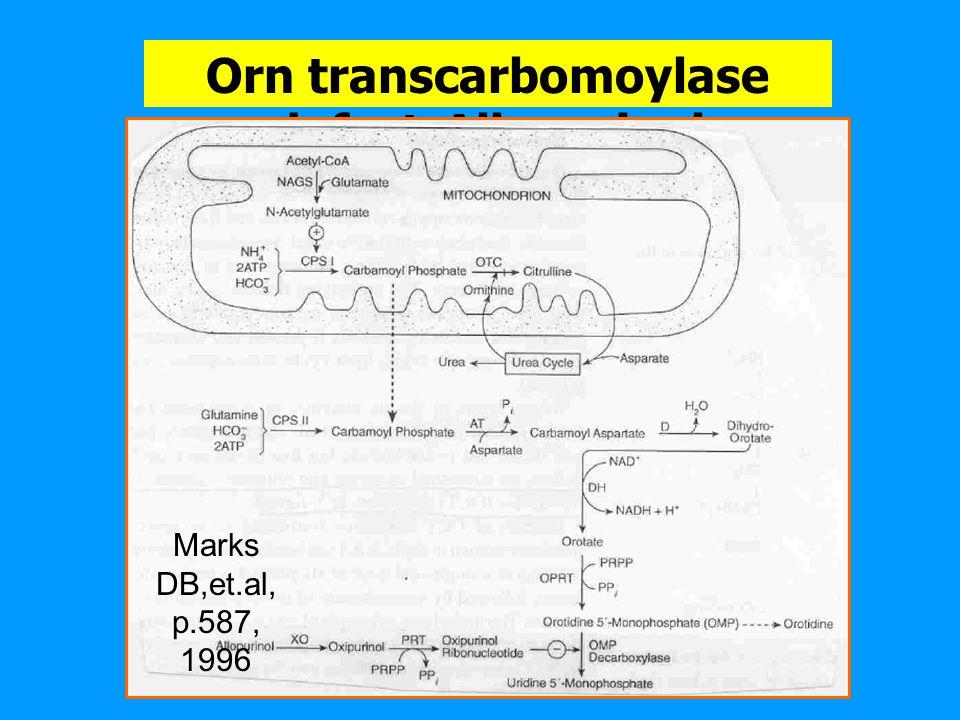 1. Hyperammonemia Type I (CPS I) 2. Hyperammonemia Type II (Orn transcarbomoylase) [X-linked gene]--->female check with allopurinol 3. Citrulilinemia