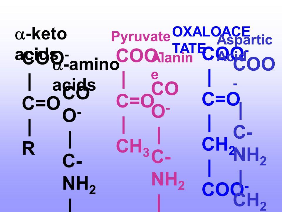 การกำจัดหมู่อะมิโน (Deamination) 1. Transamination เป็นปฏิกิริยาหลักของกรดอะมิโนในการ กำจัดหมู่อะมิโน • ยกเว้น Lys, Pro, Thr • ส่วน His, Ser, Phe, Met