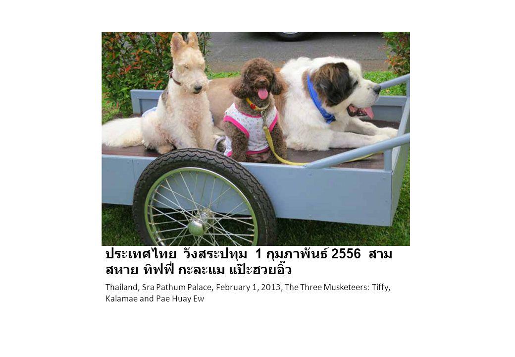 ประเทศไทย วังสระปทุม 1 กุมภาพันธ์ 2556 สาม สหาย ทิฟฟี่ กะละแม แป๊ะฮวยอิ๊ว Thailand, Sra Pathum Palace, February 1, 2013, The Three Musketeers: Tiffy,