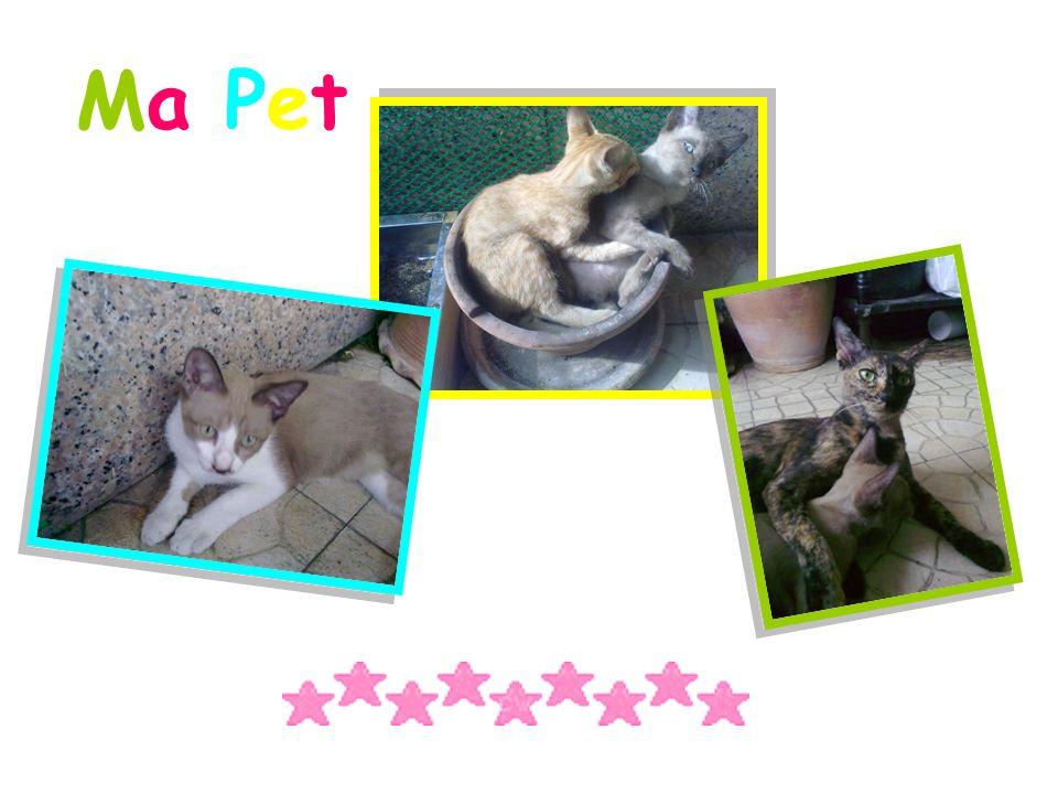 Ma Pet