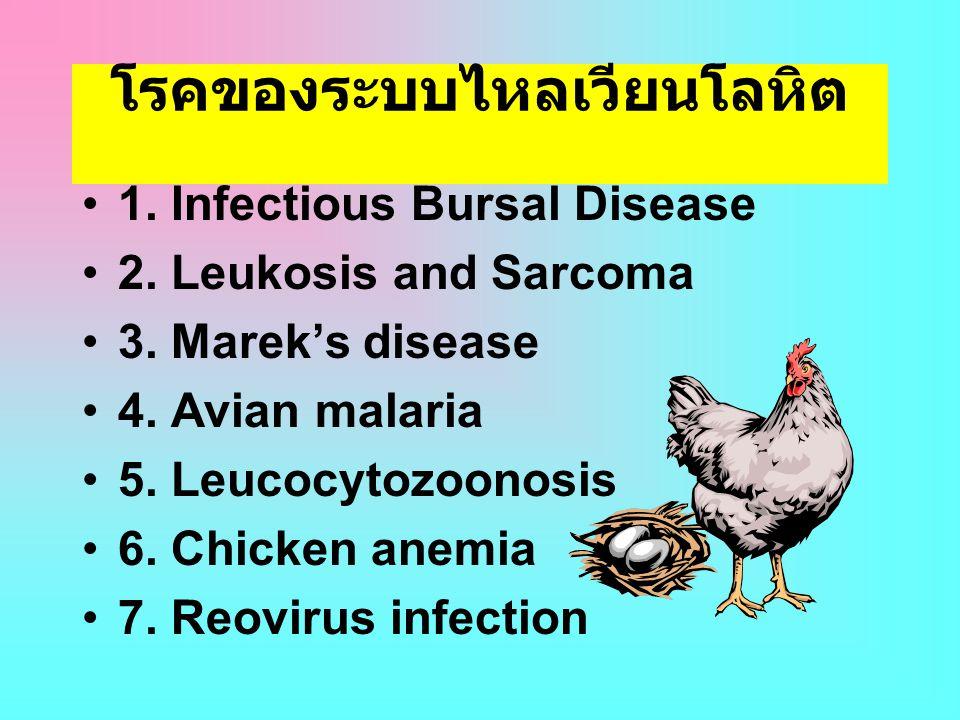 โรคของระบบไหลเวียนโลหิต •1. Infectious Bursal Disease •2. Leukosis and Sarcoma •3. Marek's disease •4. Avian malaria •5. Leucocytozoonosis •6. Chicken