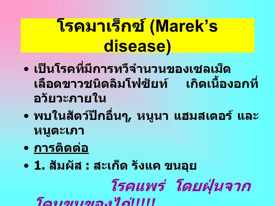 โรคมาเร็กซ์ (Marek's disease) • เป็นโรคที่มีการทวีจำนวนของเซลเม็ด เลือดขาวชนิดลิมโฟซัยท์ เกิดเนื้องอกที่ อวัยวะภายใน • พบในสัตว์ปีกอื่นๆ, หนูนา แฮมสเต