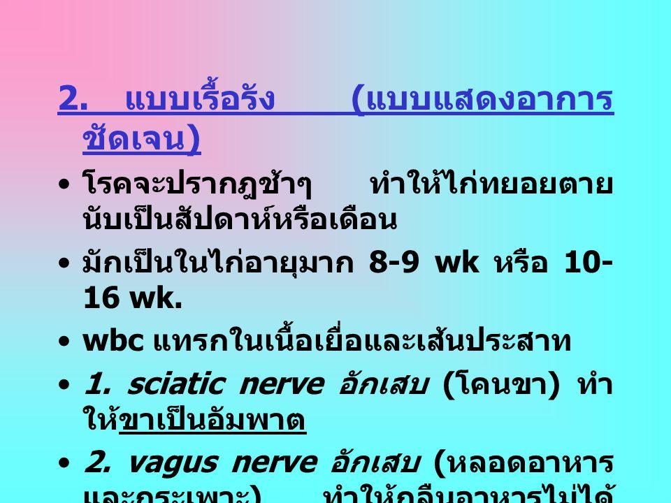 2. แบบเรื้อรัง ( แบบแสดงอาการ ชัดเจน ) • โรคจะปรากฎช้าๆ ทำให้ไก่ทยอยตาย นับเป็นสัปดาห์หรือเดือน • มักเป็นในไก่อายุมาก 8-9 wk หรือ 10- 16 wk. •wbc แทรก