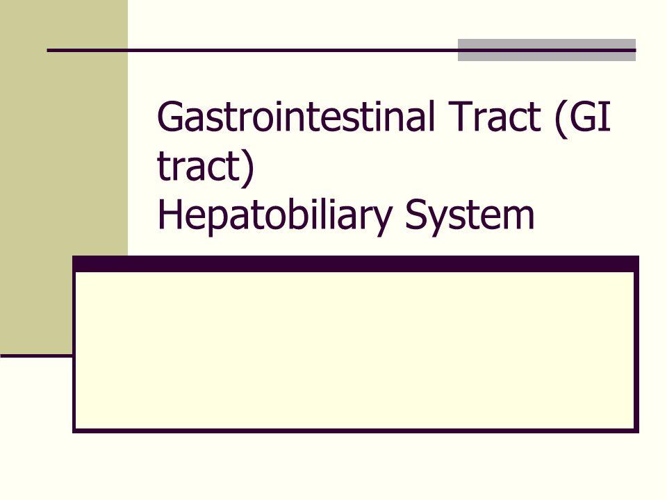 ลำไส้เล็ก (Small intestine)  ความยาว 3-5 m  duodenum 5% ~25cm.