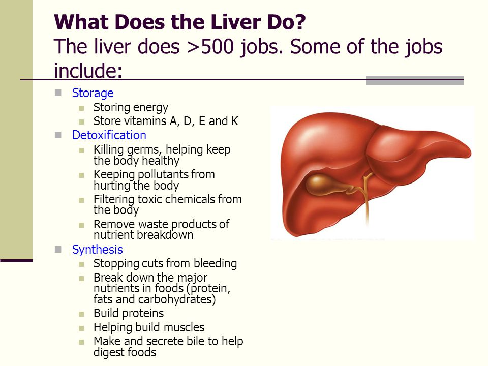 What Does the Liver Do? The liver does >500 jobs. Some of the jobs include:  Storage  Storing energy  Store vitamins A, D, E and K  Detoxification