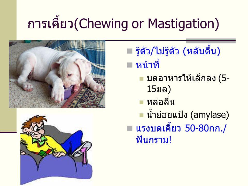 การเคี้ยว(Chewing or Mastigation)  รู้ตัว/ไม่รู้ตัว (หลับตื้น)  หน้าที่  บดอาหารให้เล็กลง (5- 15มล)  หล่อลื่น  น้ำย่อยแป้ง (amylase)  แรงบดเคี้ยว 50-80กก./ ฟันกราม!
